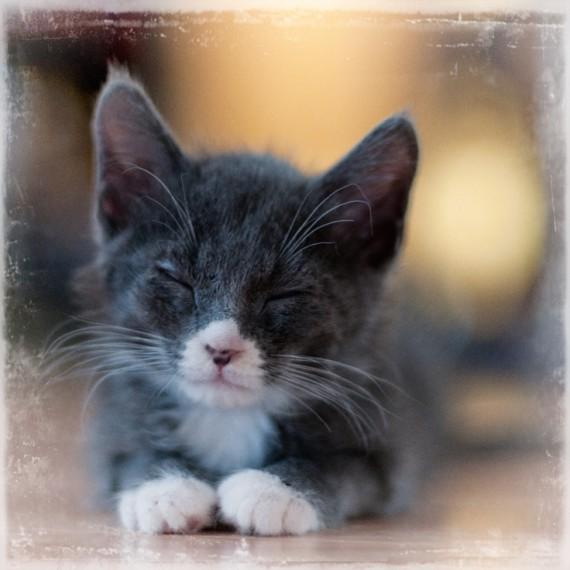 insta kitty