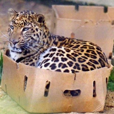 jaguar box