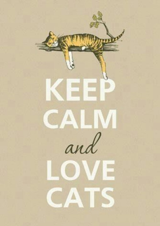 keep calm lying down cat
