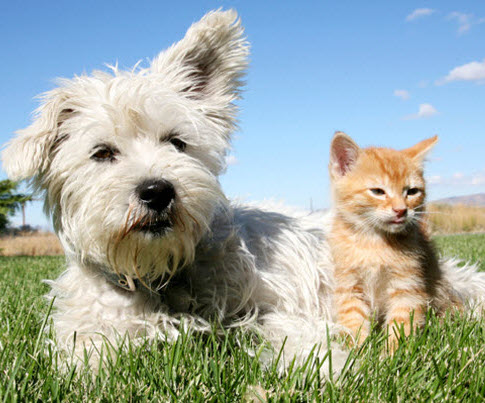 kitten-and-dog