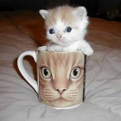 kitten cat cup