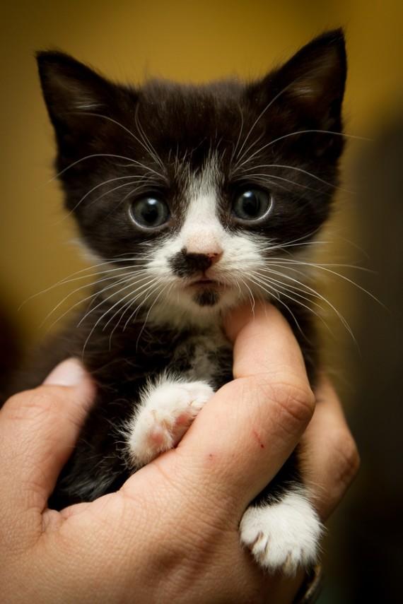 kitten hand stroke