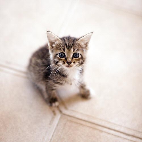 kitten on kitchen floor