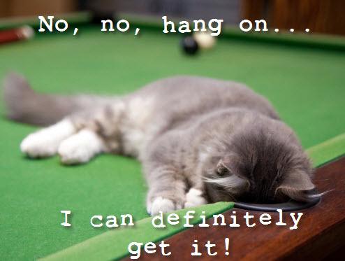 kitten snooker