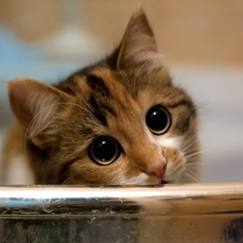 kitty big eyes