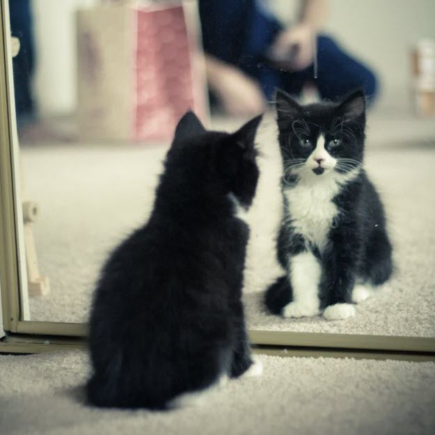 kitty mirror