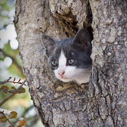 kitty tree house