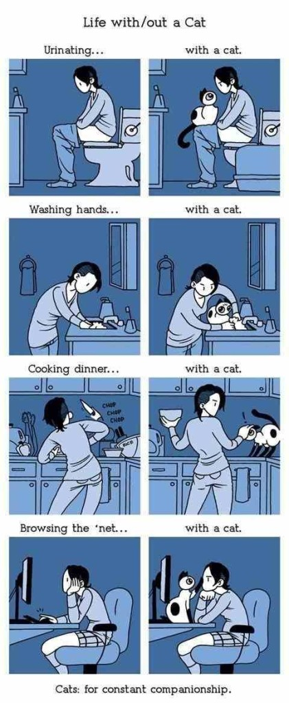 life with a cat