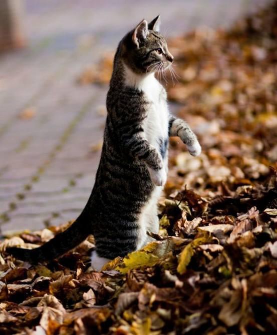 meer-cat!