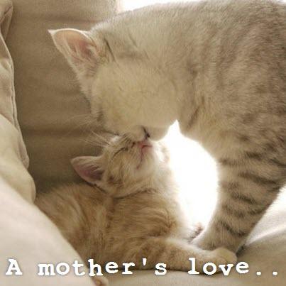 mum and baby kitten