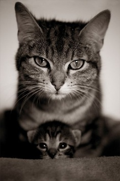 mum and kitten bw