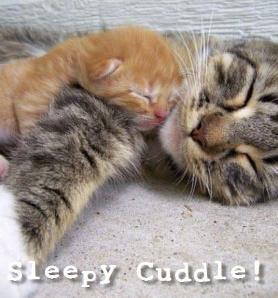 mum kitten cuddle