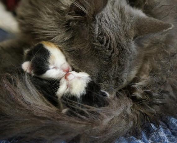 mum newborn kittens