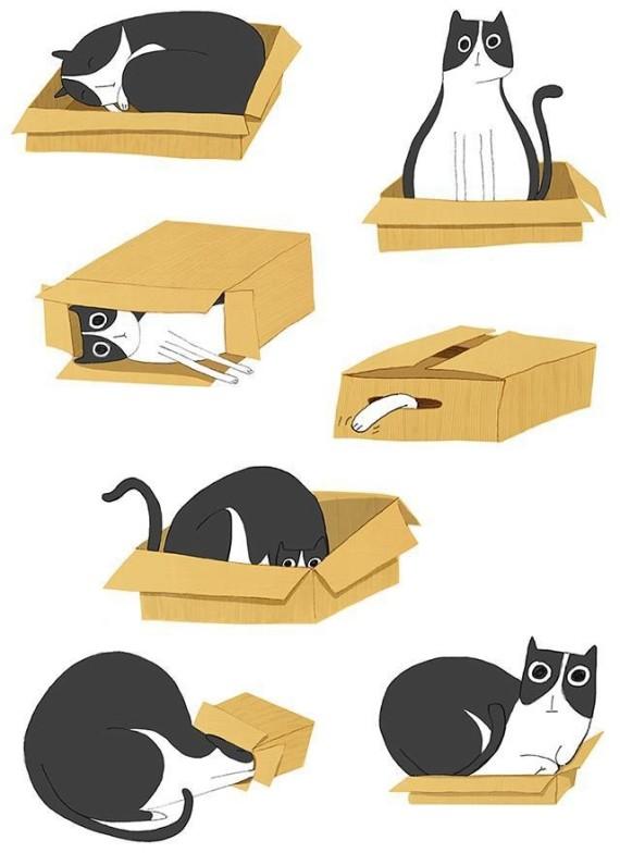 my cat box