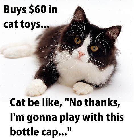 no cat toys