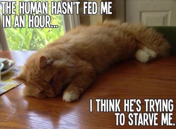 not fed me cat