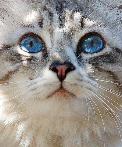 ol blue eys