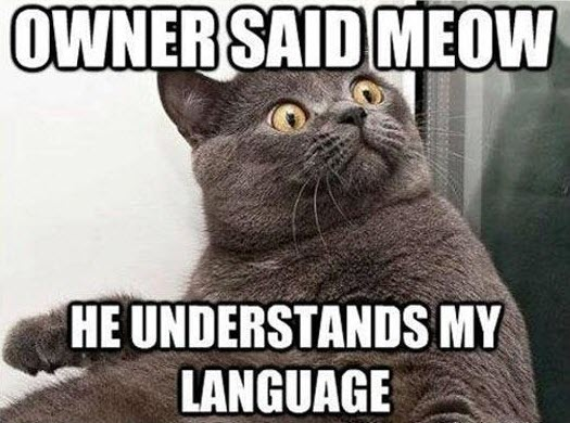 owner said meow