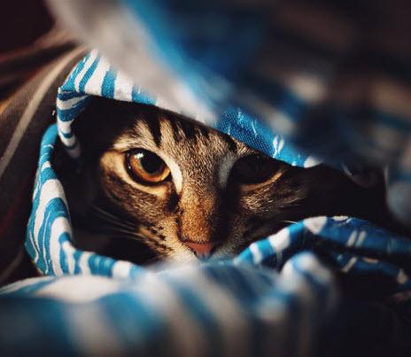 peek a bed