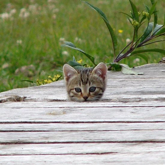 peek decking kitten