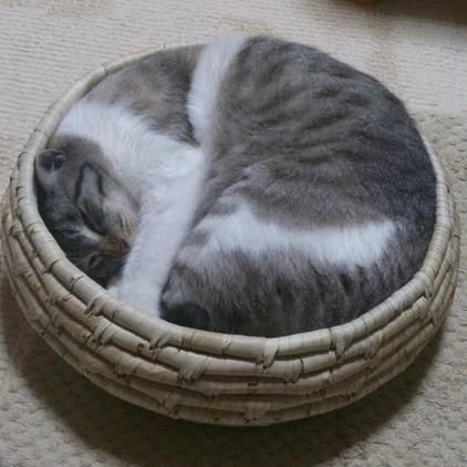 perfect fit cat