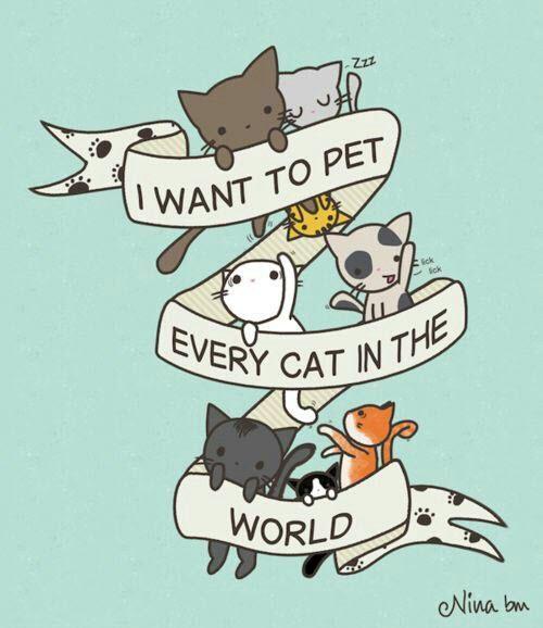 pet every cat