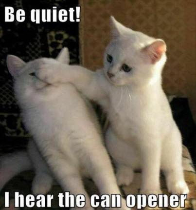 quiet can opener