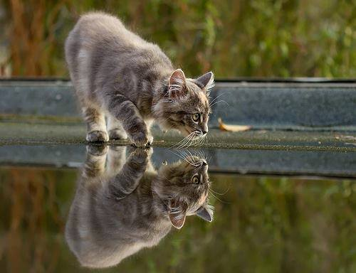 reflection cat prowl