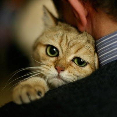 sad hug cat