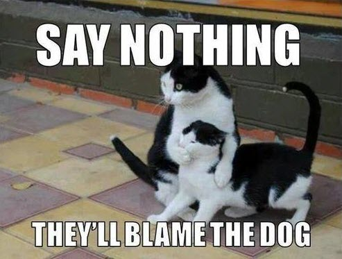 say nothing theyll blame the dog