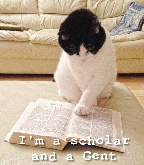 scholar cat