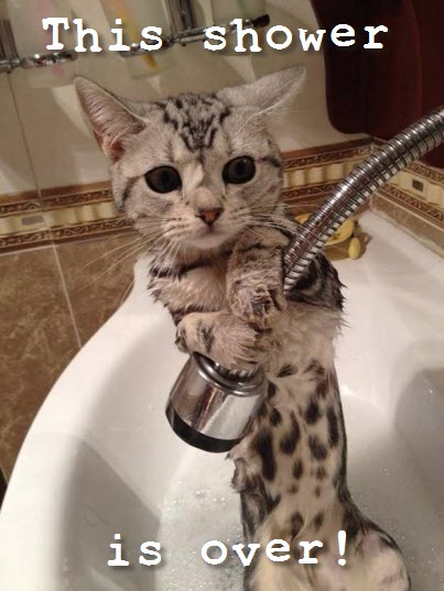 shower done cat