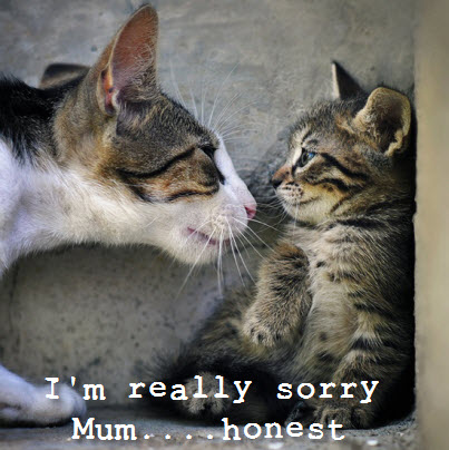 sorry mum