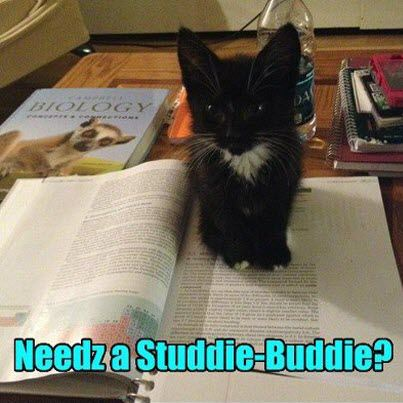 studdie-buddie