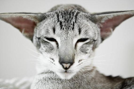 stunner cat weird