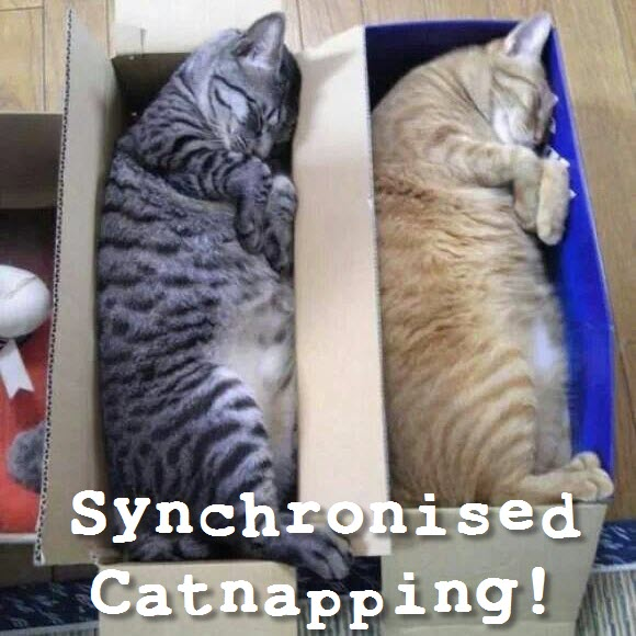 synchronised cat napping