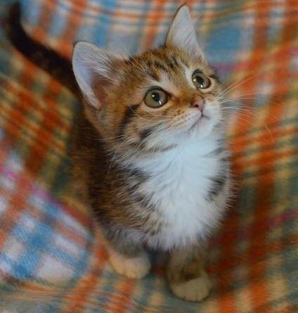 tartan kitty large