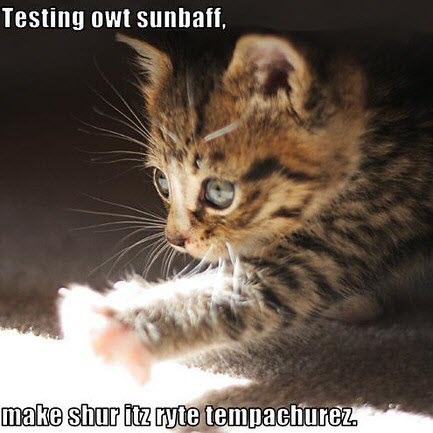 test sun temp cat