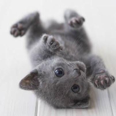 tiny grey kitty