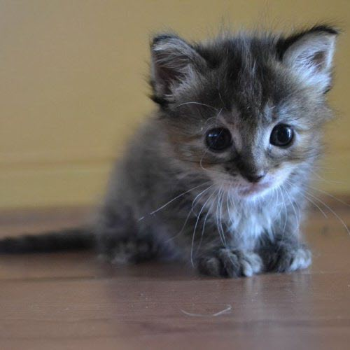 Scared Kittens | www.pixshark.com - Images Galleries With ...