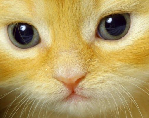tiny kitten close ginger