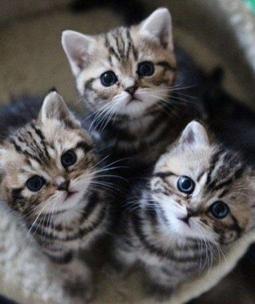 trio of kittens