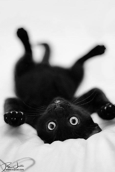 upside down black kitty