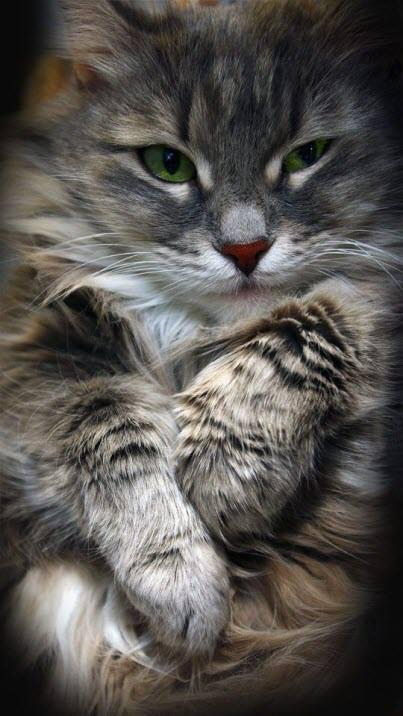 very pretty cat