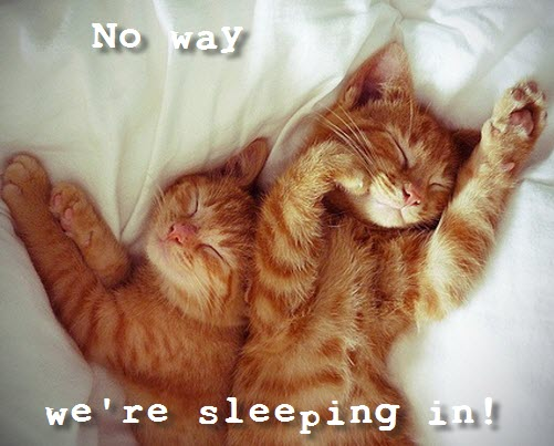 we are sleeping in