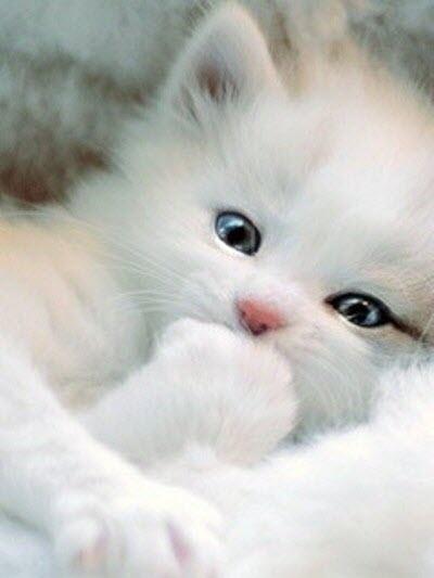 white kitten paw