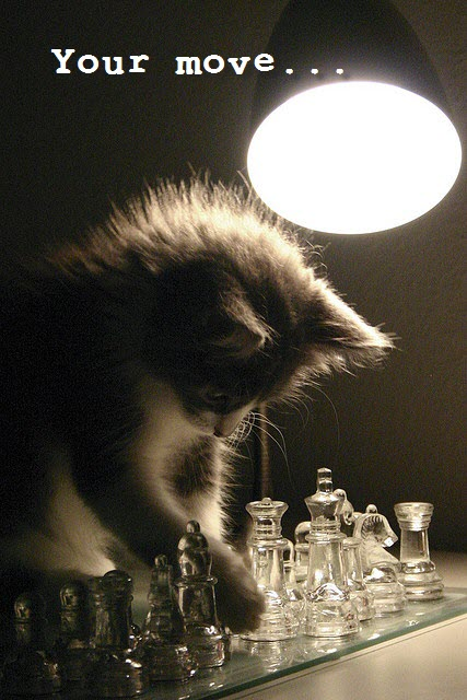 your move cat