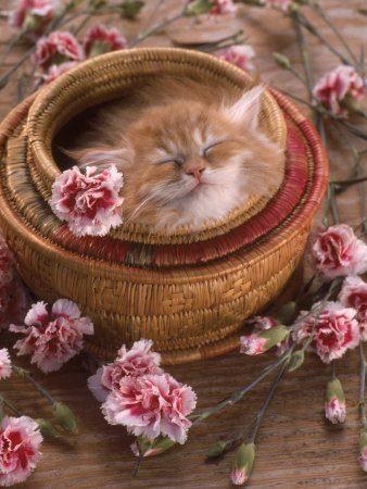 zen cat spring cat