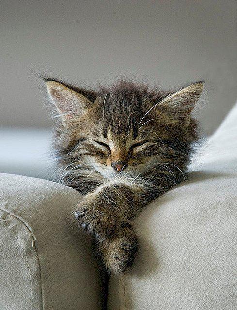 zen sofa kitten