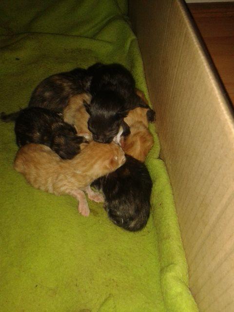8hr old kittens